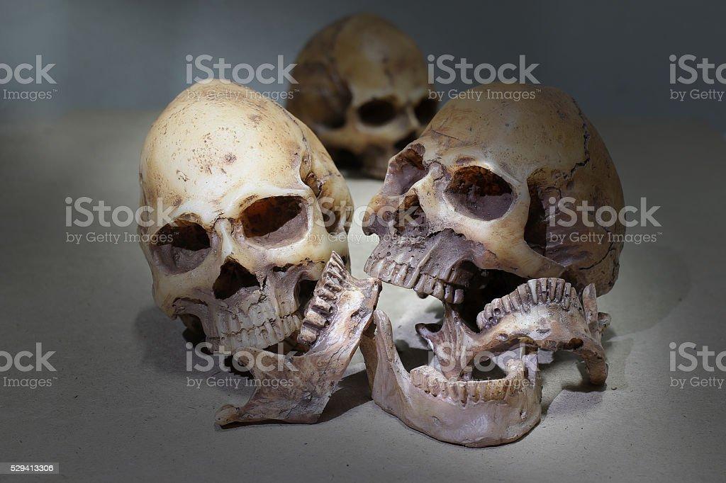 Still life photography with human skulls group stock photo