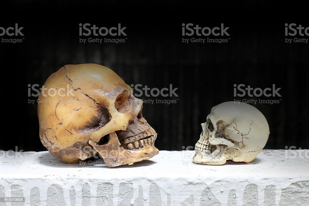 Still life photography with human skulls with black background stock photo
