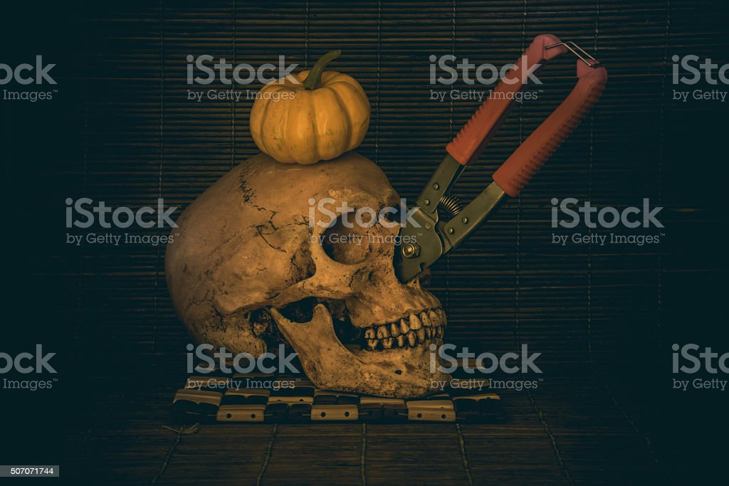 Still Life Skull and pumpkin fruit on the timber stock photo