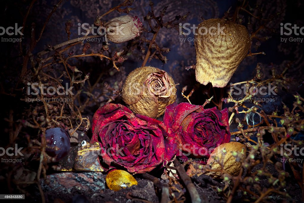 Still life wallpaper with dried flowers stock photo