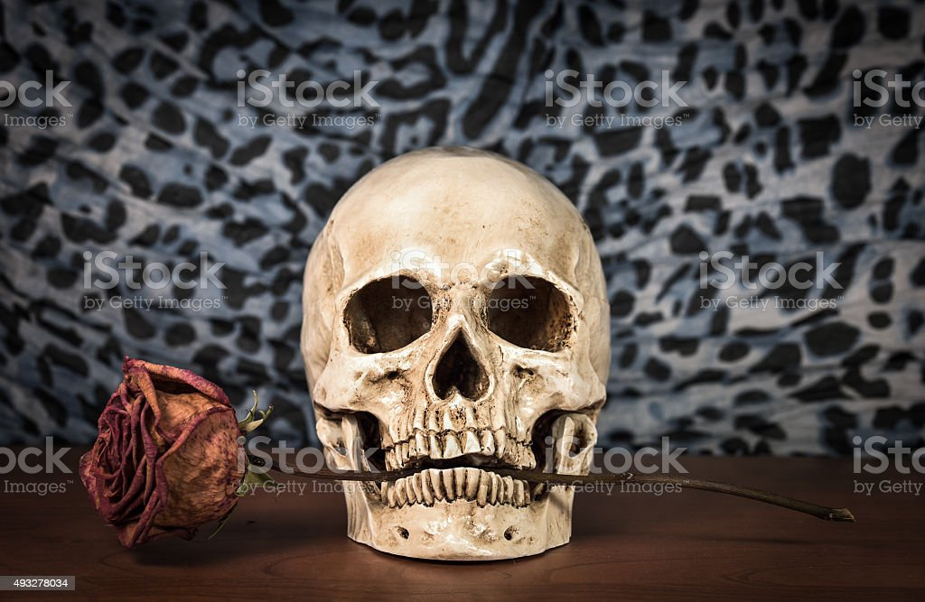 Still life white human skull with dry red rose stock photo