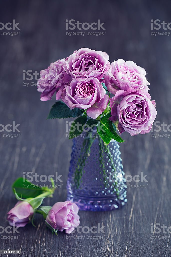 Still life with a fresh purple roses stock photo
