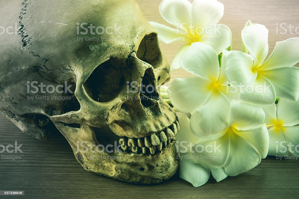 Still Life with a Skull and Plumeria flowers vintage tone stock photo