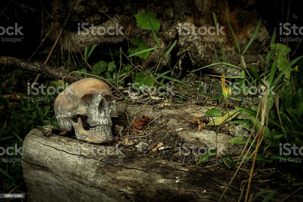 Still Life with a Skull in forest stock photo
