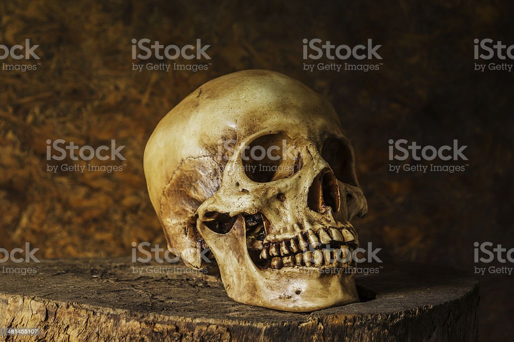 Still Life with a Skull. royalty-free stock photo