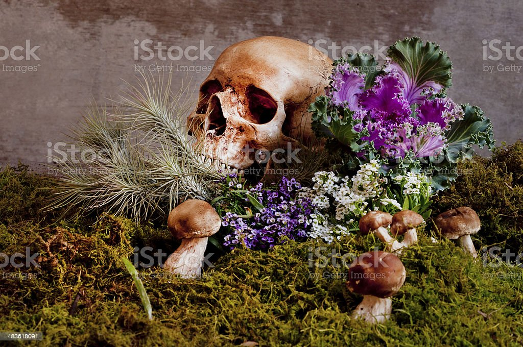 Still Life with a Skull royalty-free stock photo