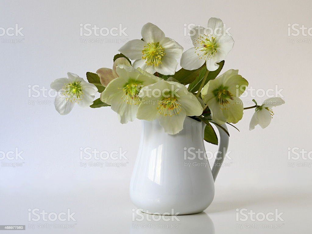Still life with bouquet of spring flowers helleborus in vase. stock photo
