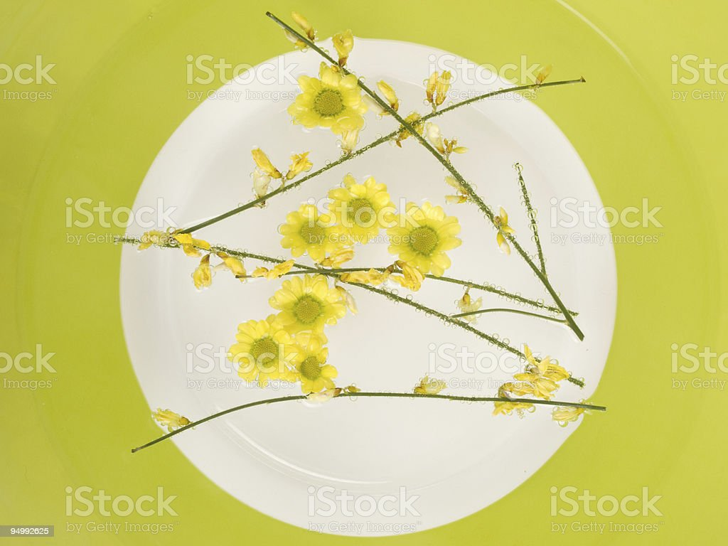 Still life with chrysanthemum royalty-free stock photo