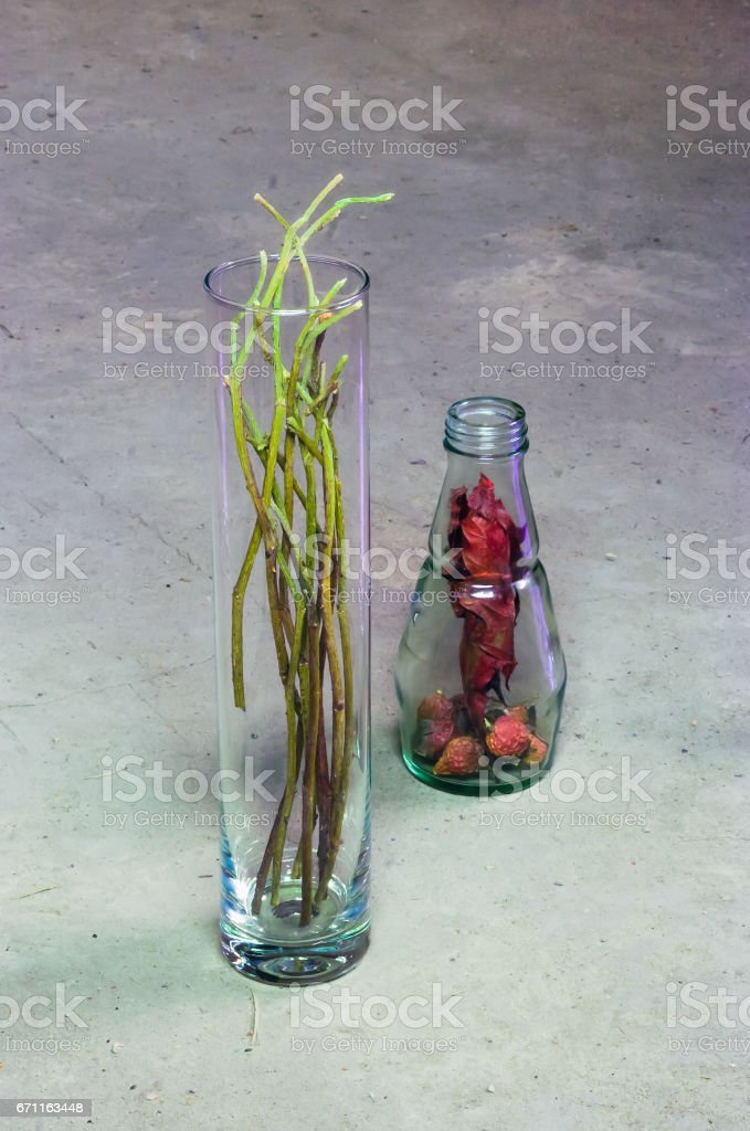 Still Life with Dried Rosehips stock photo