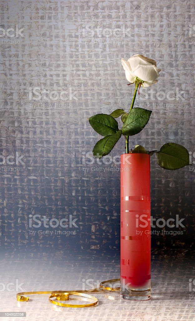 Still life with one white rose royalty-free stock photo