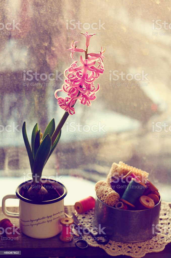 Still life  with pink hyacinth and wooden thread spools stock photo