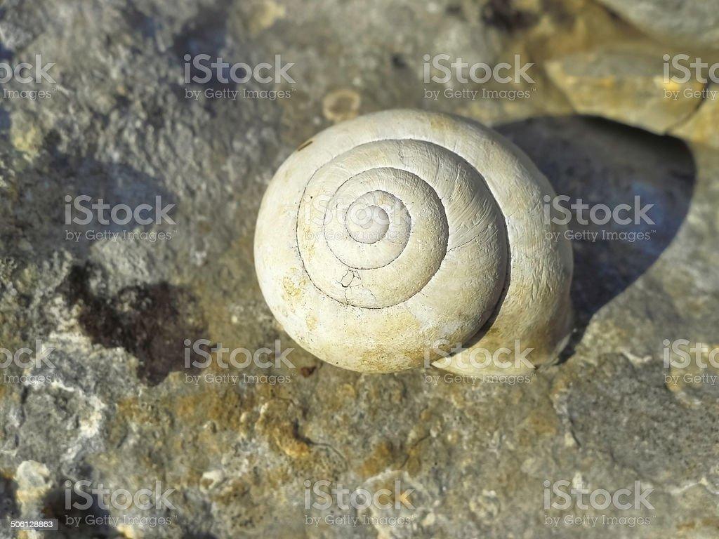 Still life with shell. royalty-free stock photo