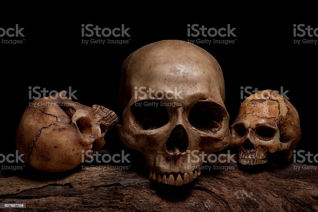 still life with three human skulls stock photo