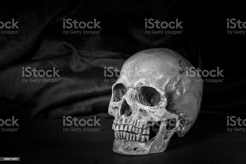 Still life,Black and white of human skull stock photo