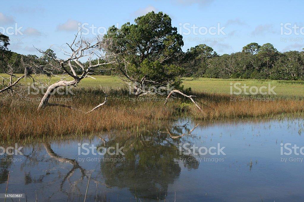 Still Marsh royalty-free stock photo