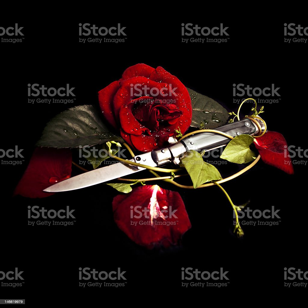 Stilletto knife and red rose stock photo