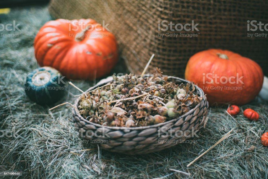 Still-life of fresh harvest stock photo