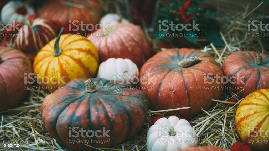 Still-life of haloween pumpkins stock photo
