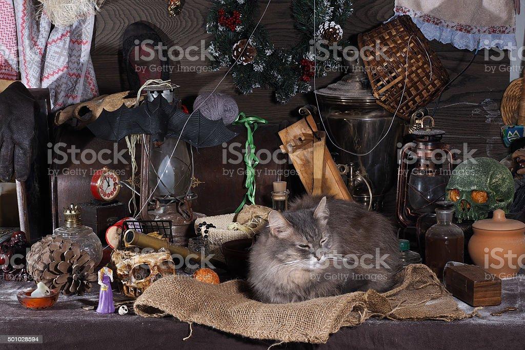 Still-life with cat stock photo