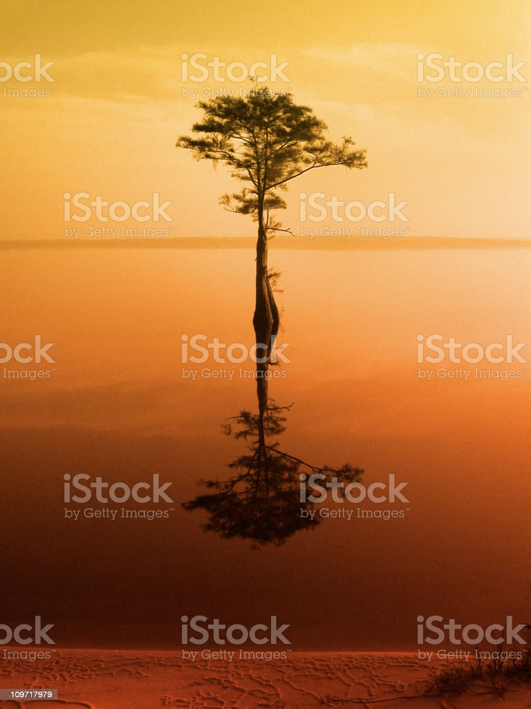 Stillness-orange royalty-free stock photo