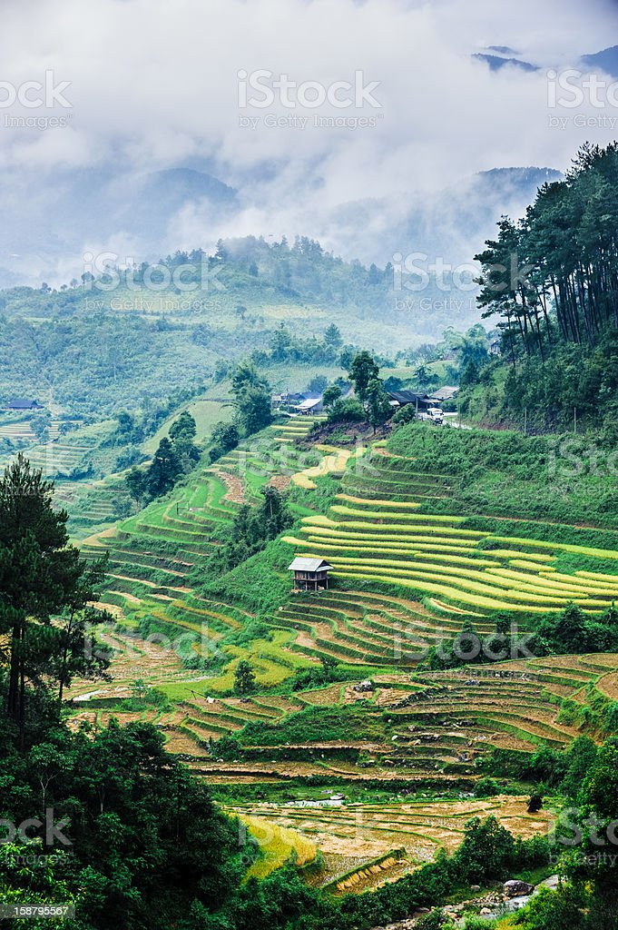 Stilt house on rice terraced field with mountains and clouds royalty-free stock photo