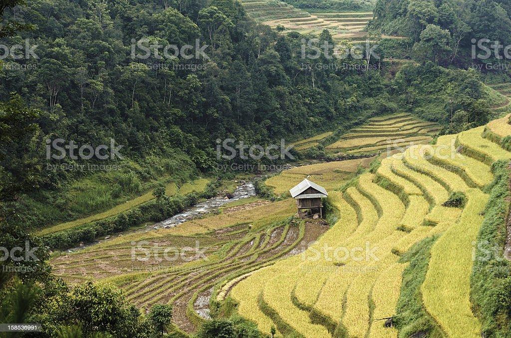 Stilt house on the rice terraces field royalty-free stock photo