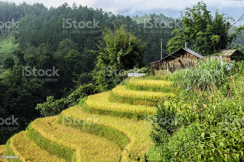 Stilt house on the top of rice terraces field royalty-free stock photo