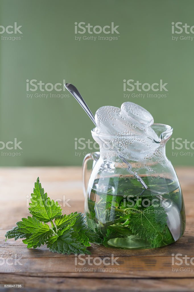 Stinging nettle ( Urtica dioica ) stock photo