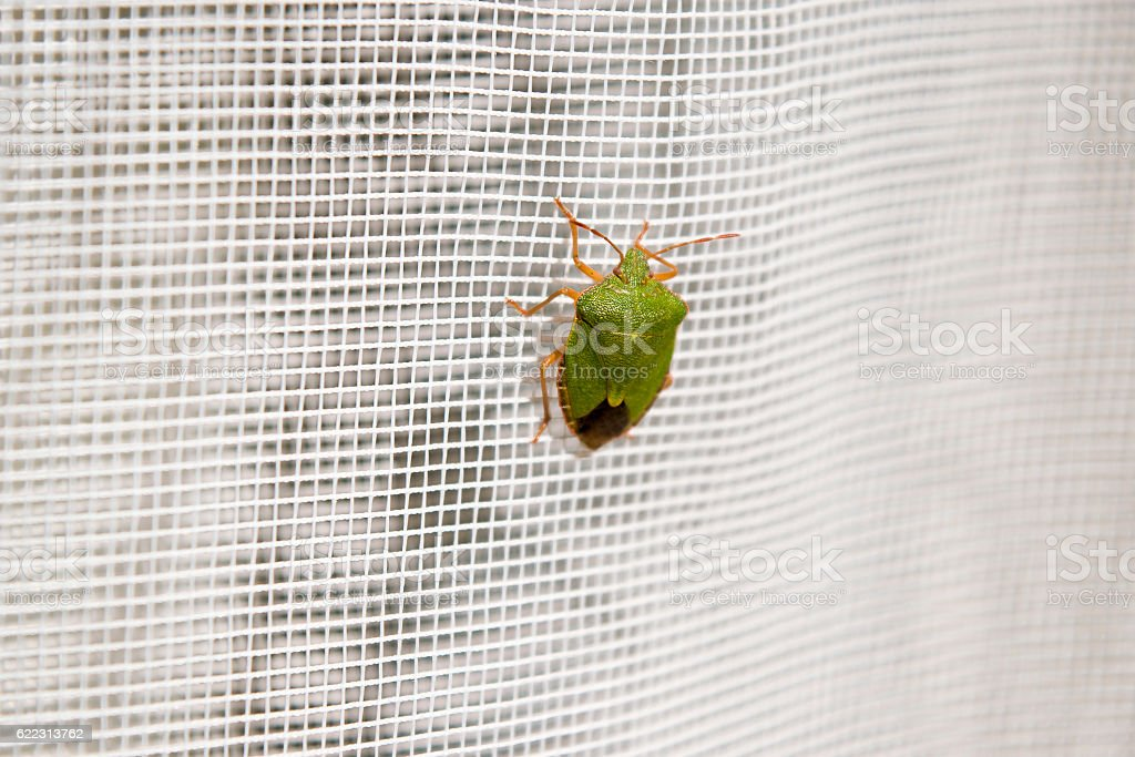 Stink bug stock photo