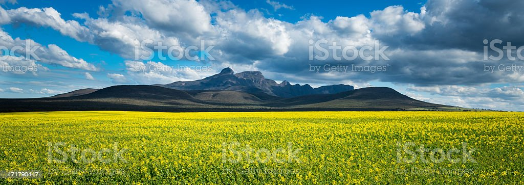Stirling Ranges with Flowers stock photo