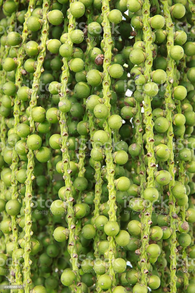 Stock Photo: Close up of palm tree with fruits stock photo