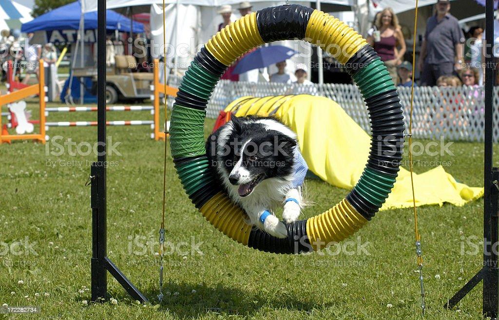 Stock Photo of Jumping Dog stock photo