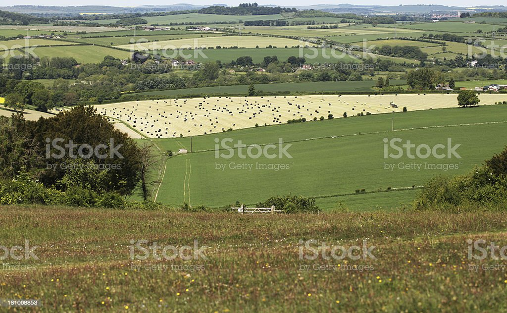 stockbridge down fields stock photo