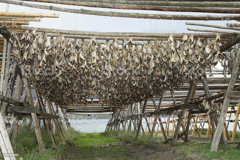 Stockfish hanged up on fish drying flakes stock photo