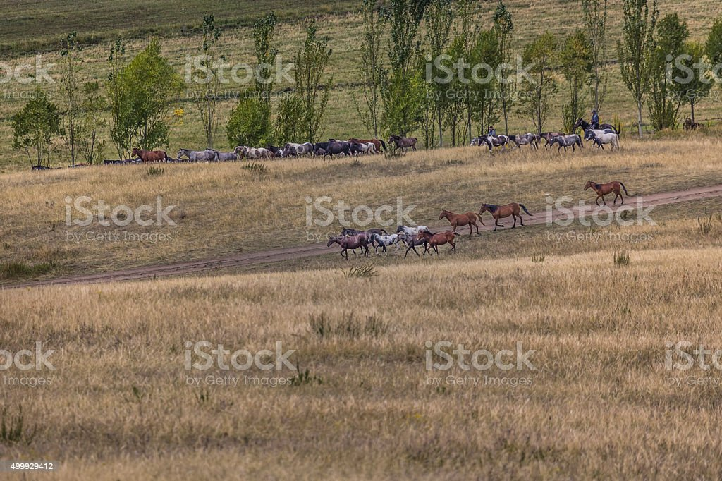 Stockriders with flock in Alay mountains on pastureland stock photo