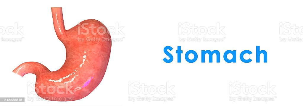 Stomach stock photo