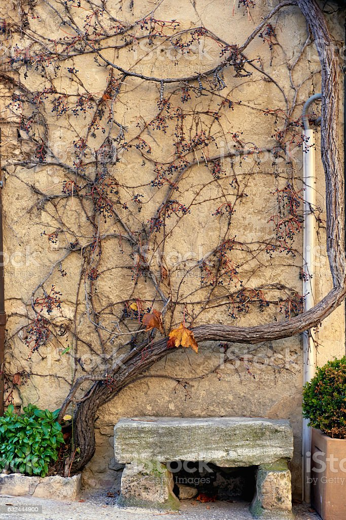 Stone bench and dry creeper plant on a wall stock photo