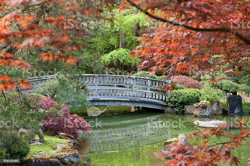 Stone bridge framed by the foliage. stock photo