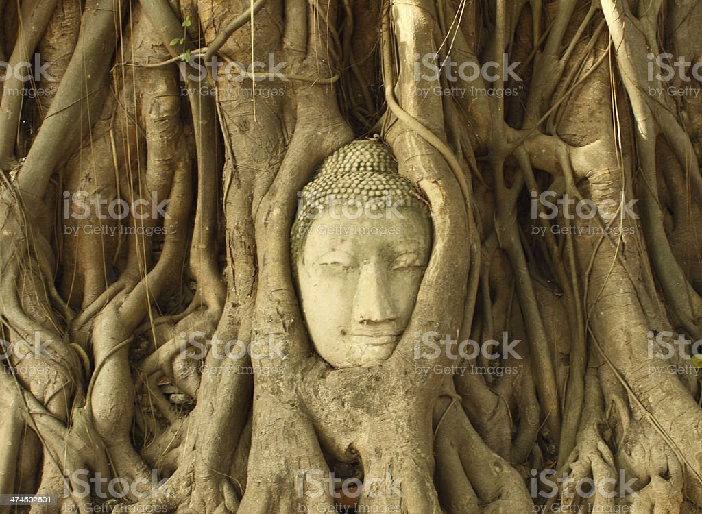 Stone budda head traped in the tree roots stock photo