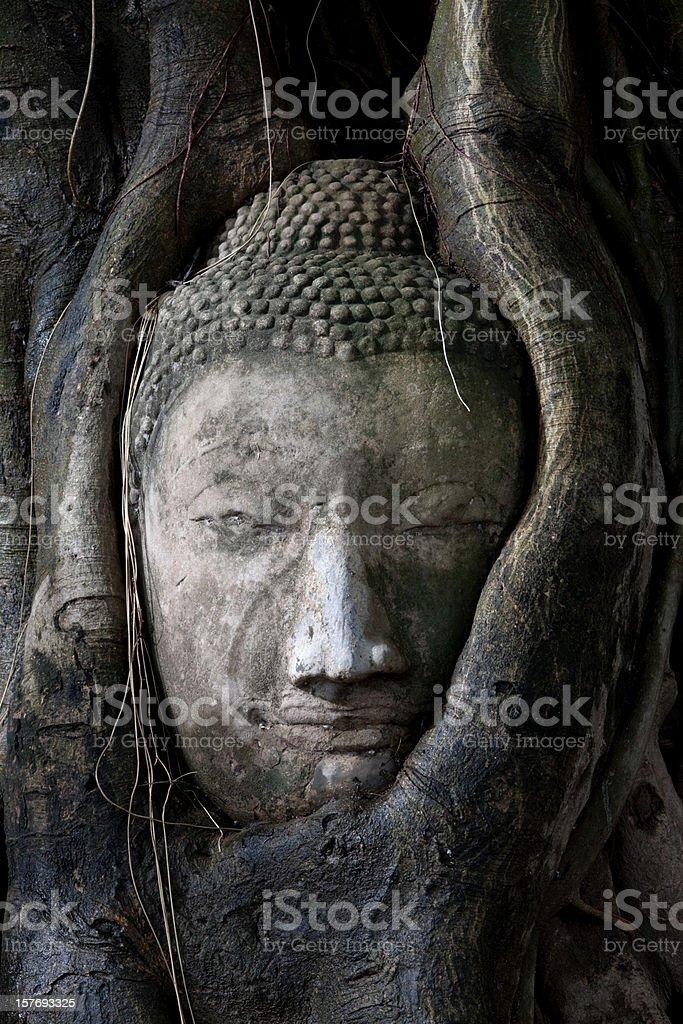 Stone Buddha head at Wat Phra Mahathat, Ayuthaya, Thailand. stock photo