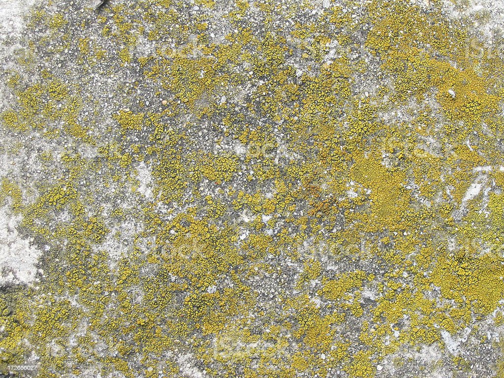stone cover with fungus texture royalty-free stock photo