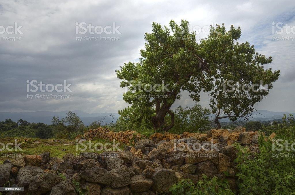 Камень Забор Стоковые фото Стоковая фотография
