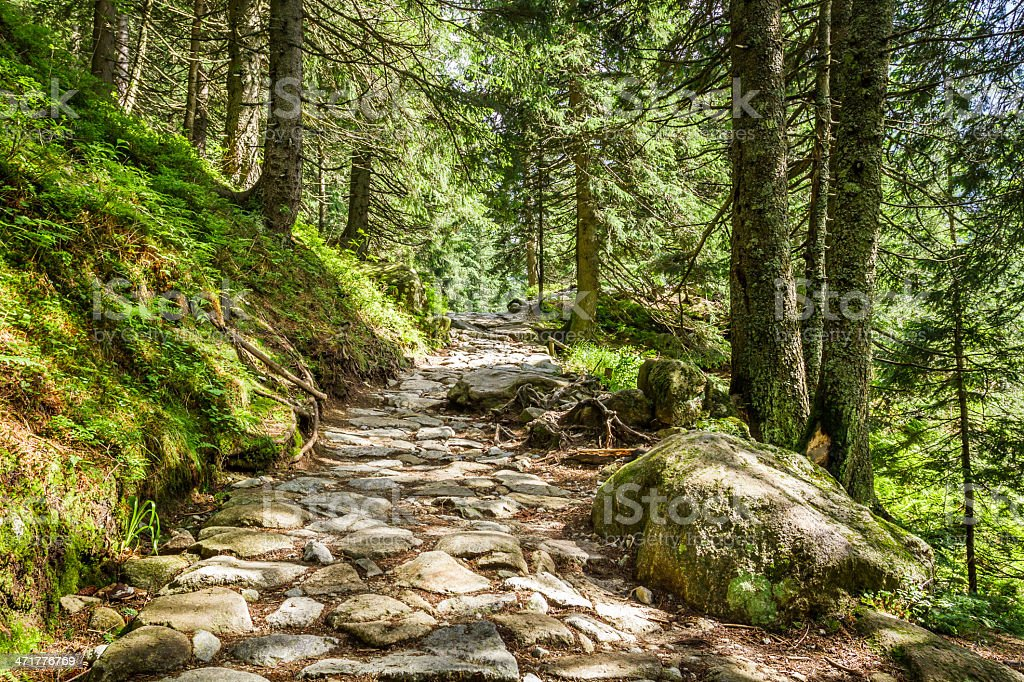 Stone footpath between the trees in mountains royalty-free stock photo