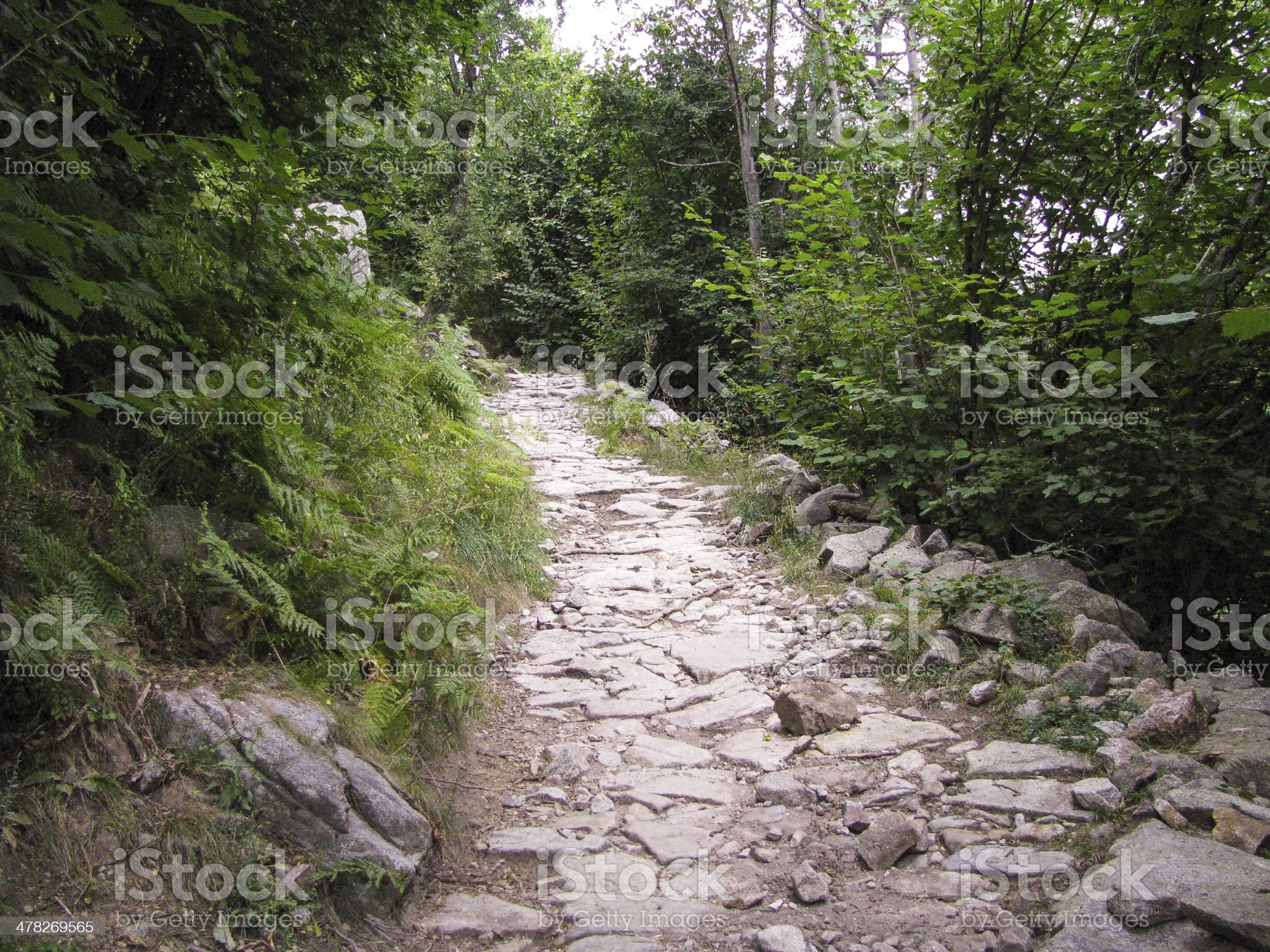 Stone forest road royalty-free stock photo