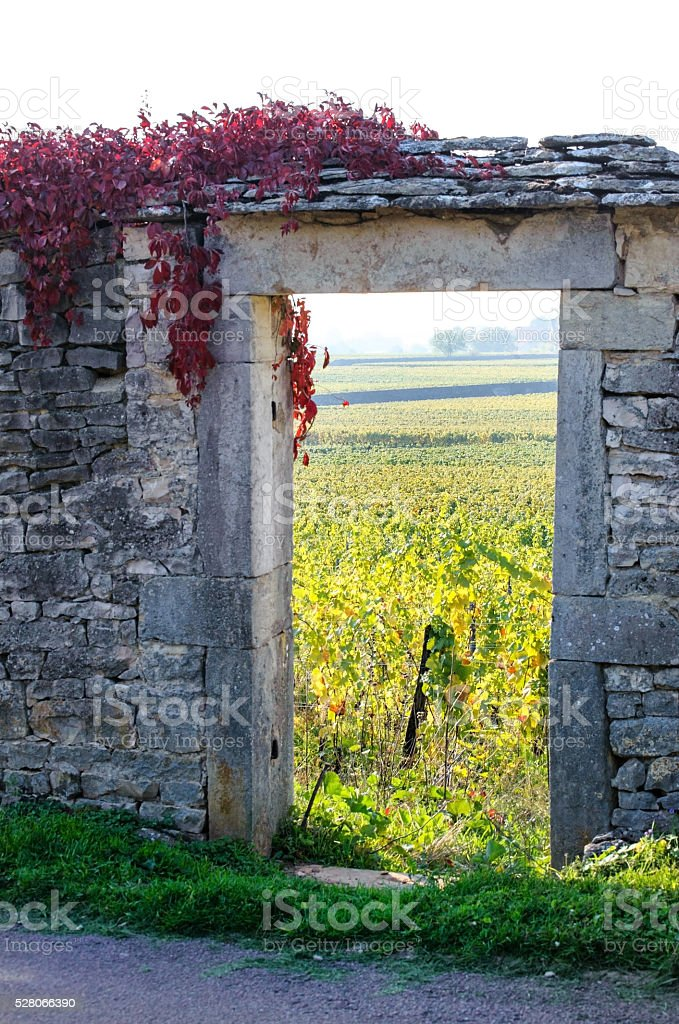 Stone gateway in vaneyard in autumn time stock photo