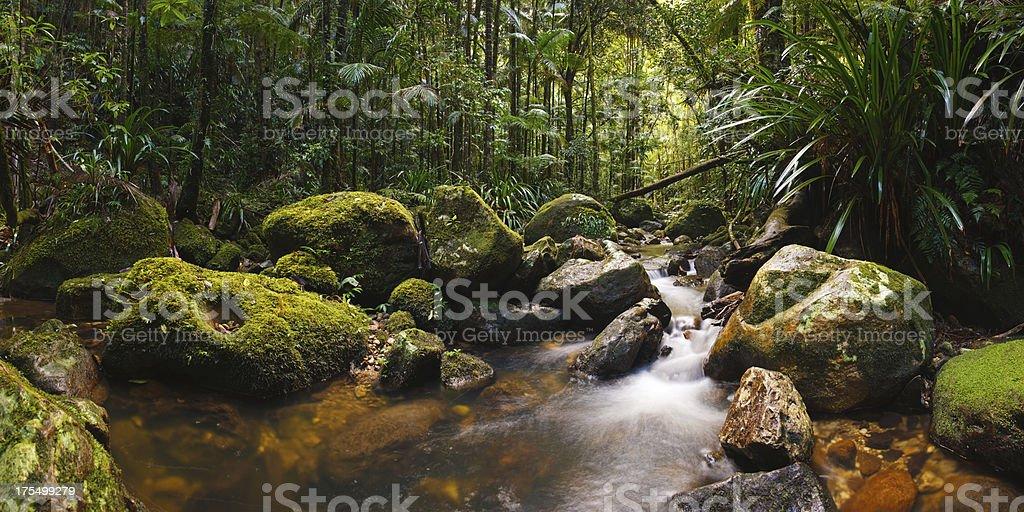 Stone Grove Rainforest Panorama royalty-free stock photo