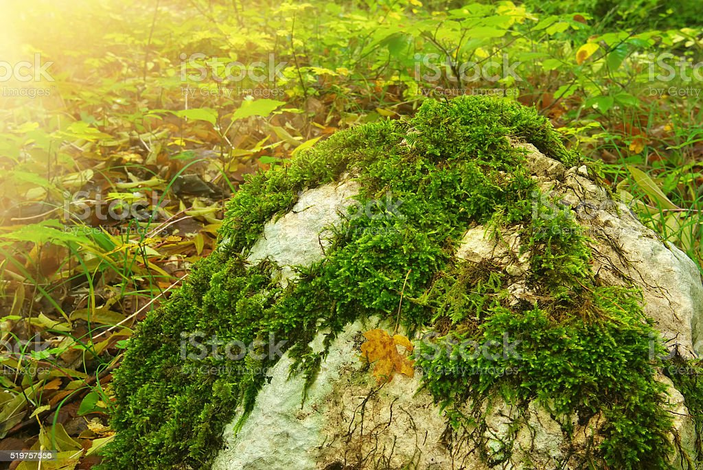 stone in autumn forest stock photo