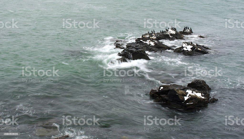 Stone island bird stock photo