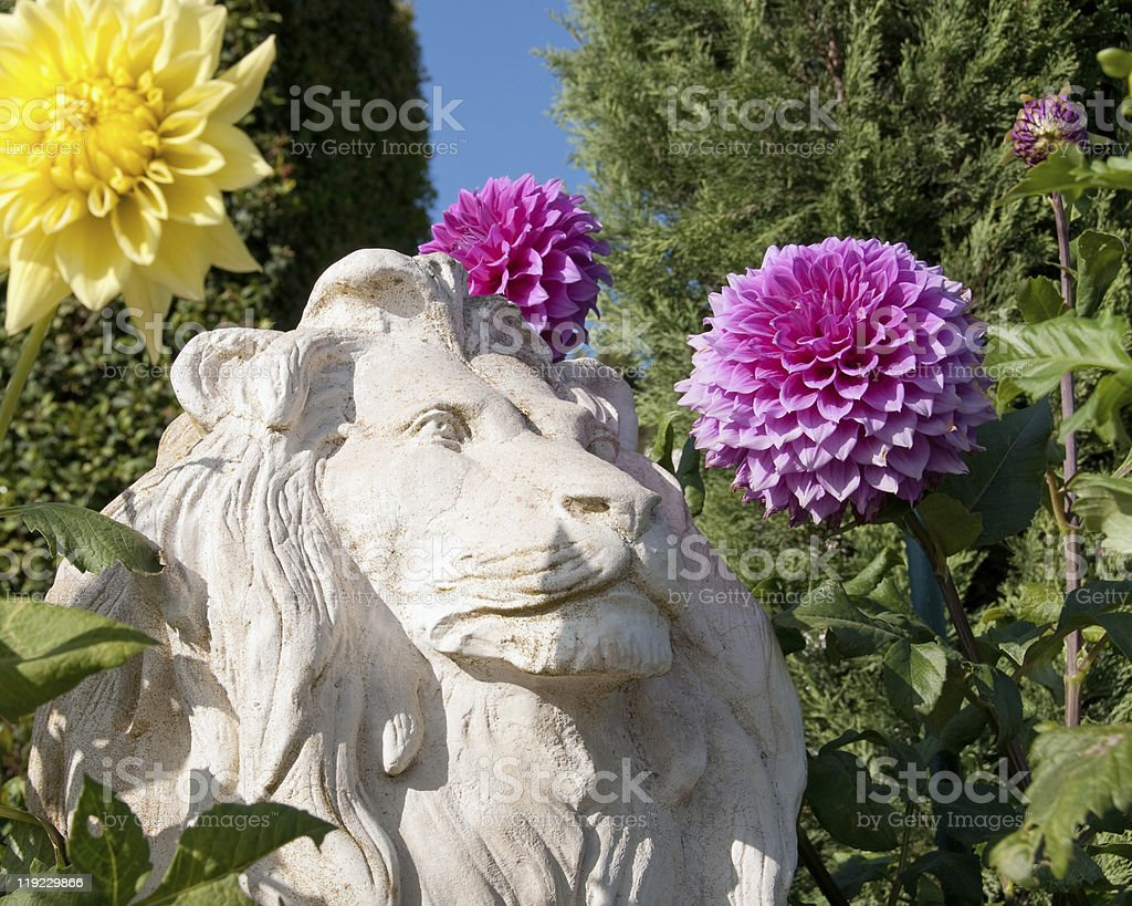 stone lion with summer dahlias royalty-free stock photo