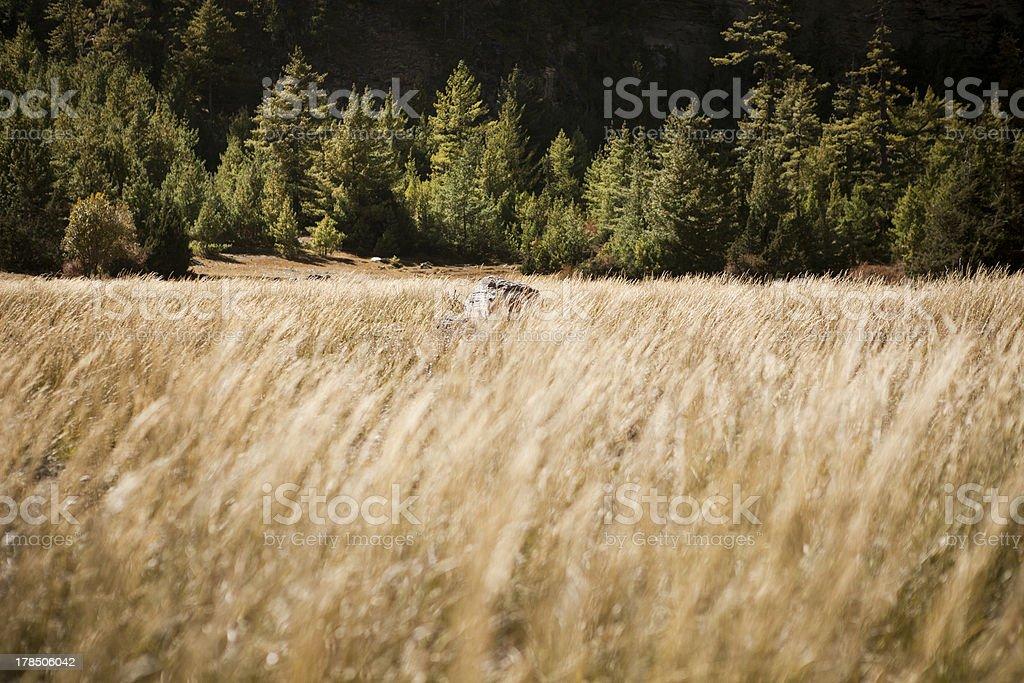 Stone on a grassland royalty-free stock photo